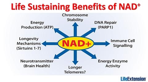 SLIDE_NAD+ life sustaining benefits
